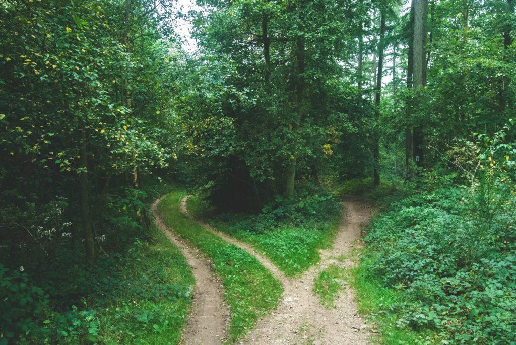 Пър в гората